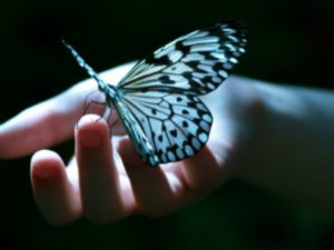 butterfly-hand-resized-2
